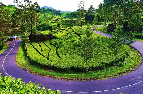 Profil Taman Wisata Alam Situ Patenggang Bandung