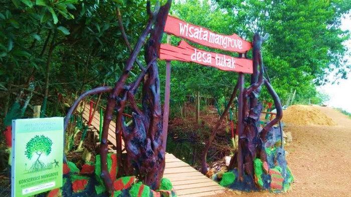 Profil Hutan Mangrove Desa Tukak Toboali Bangka Selatan
